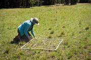 faculty member working on experiment in the grass